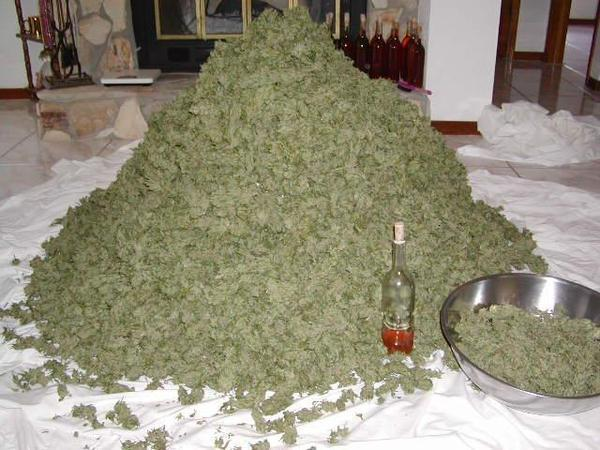 alot of weed. thats alot of weed